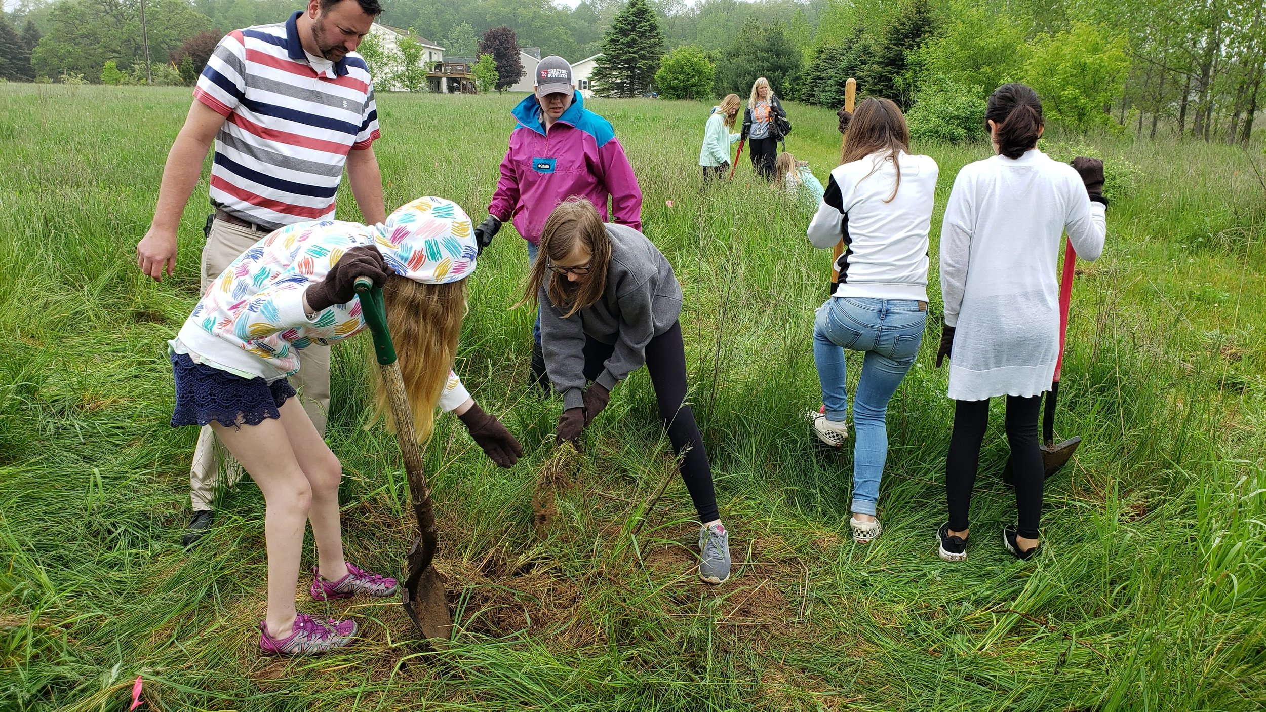 Removing invasive spotted knapweed to make space for pollinator plantings