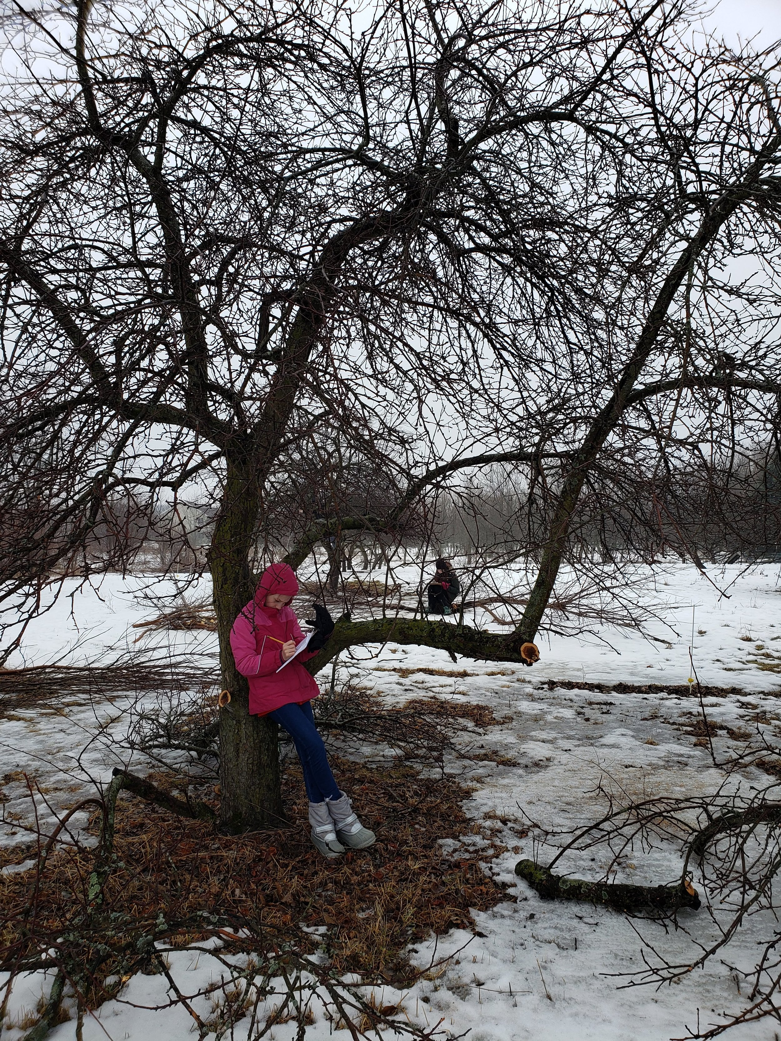 Reflecting on signs of life in the wintry orchard