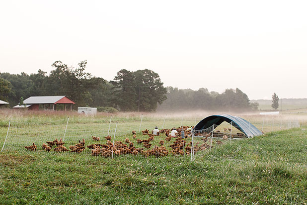 editorial photo of farm at sunrise outside richmond - Sarah Der