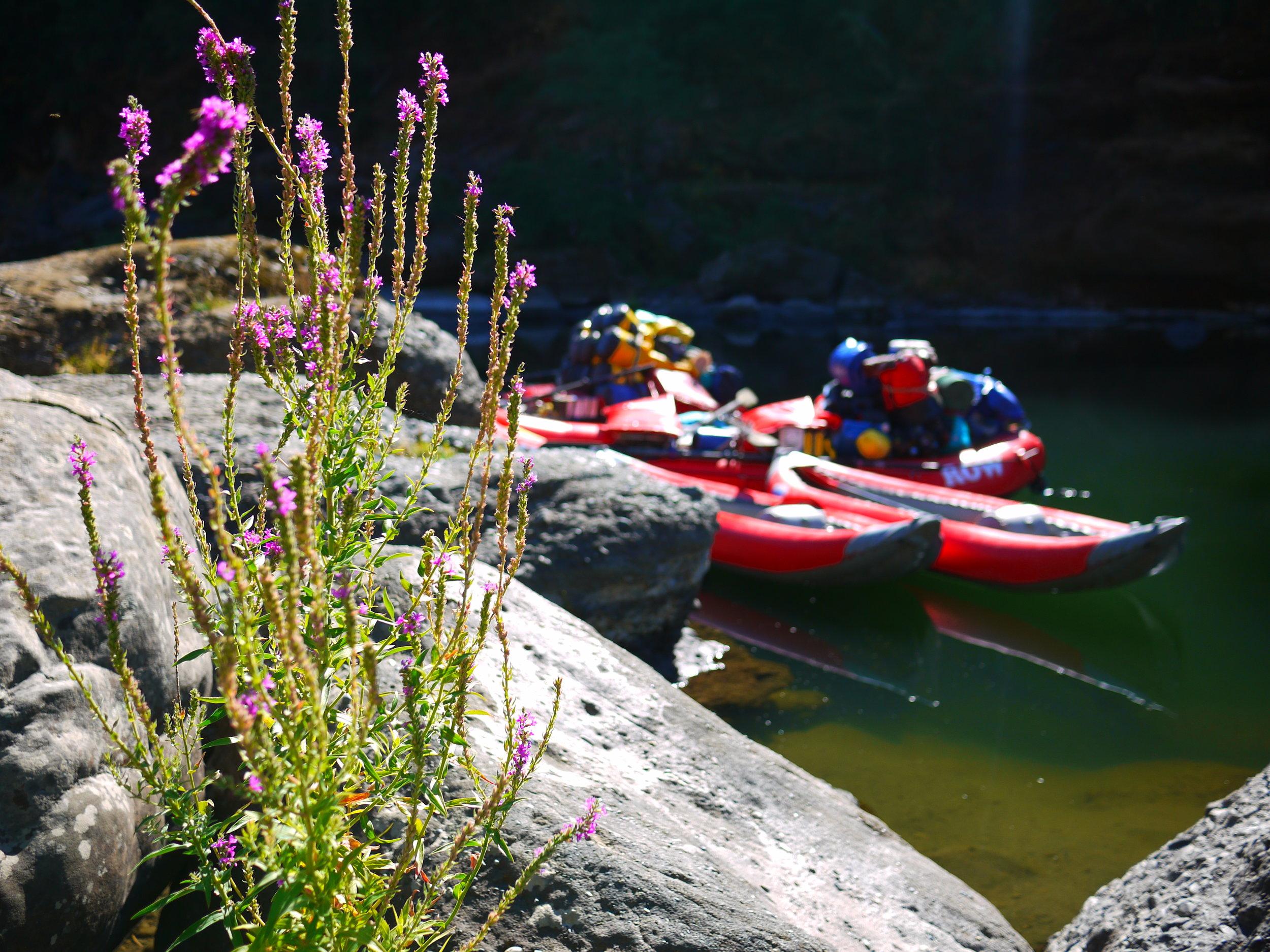 Wild & Scenic Rogue River