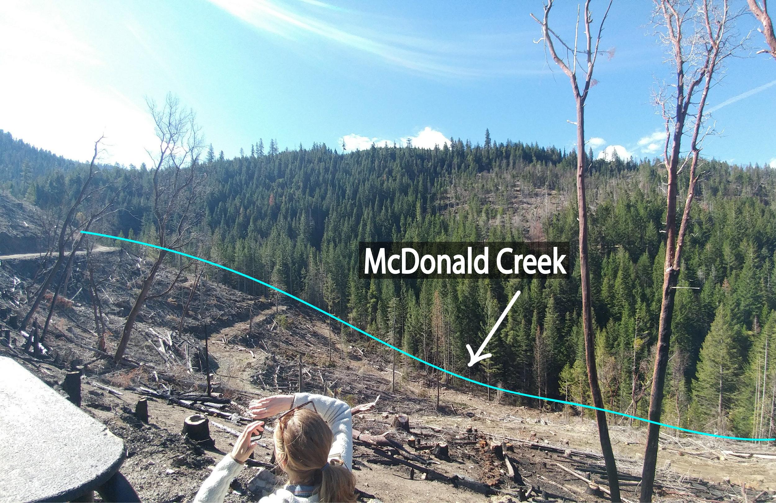 Logging practices, including  herbicide application , along McDonald Creek.