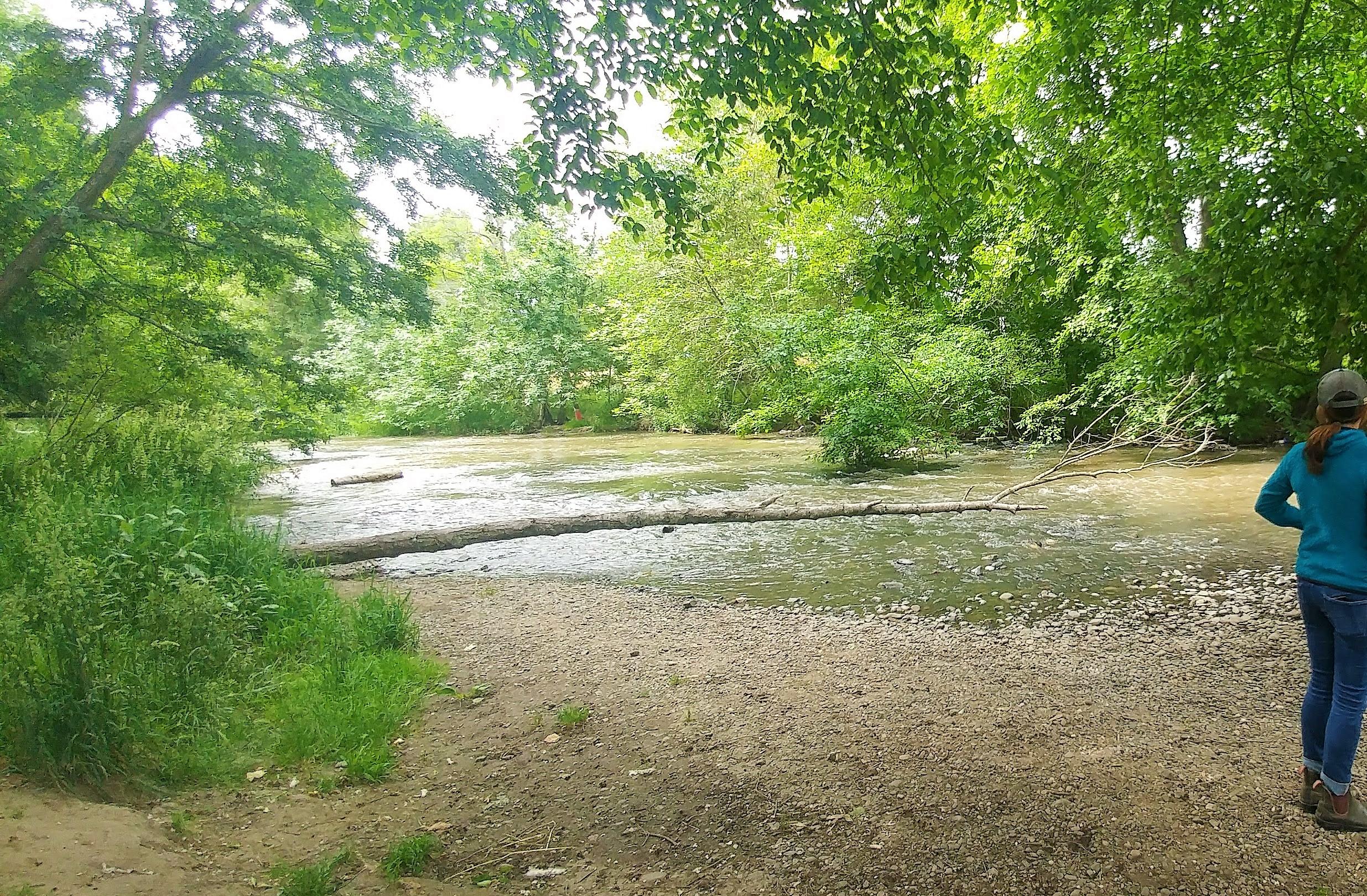 Bear Creek, Bear Creek Park, Medford