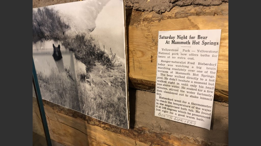 Click on this photo to read this hilarious article about a bear who loved bathing in a hot spring in Yellowstone Park. We saw this in the Gallatin History Museum.