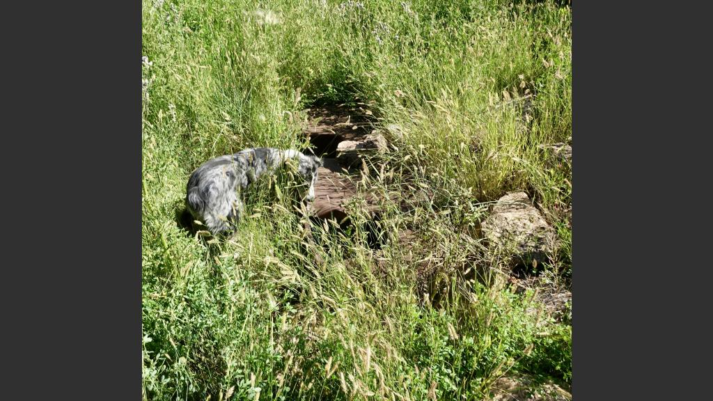All that remains of my father's home on the homestead are some foundation rocks and a chunk of metal in what was the basement.