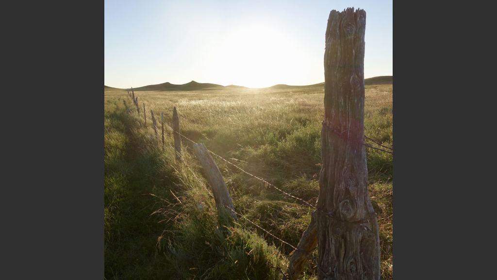 A breeze rippled through the knee-high grass like a green wave.