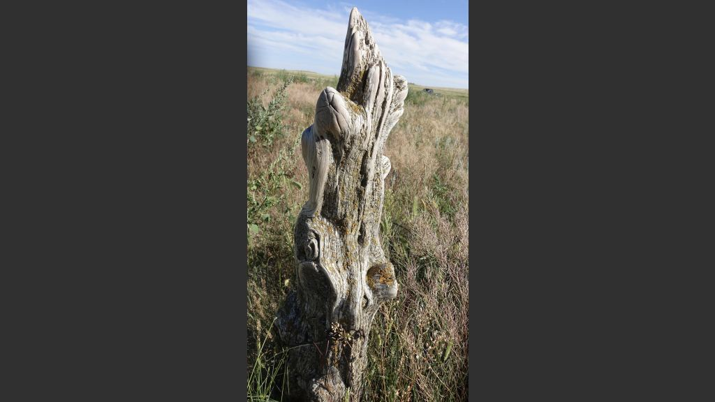 A weather-worn cedar fence post that dates back to dad's years on the homestead (1912-1930s)