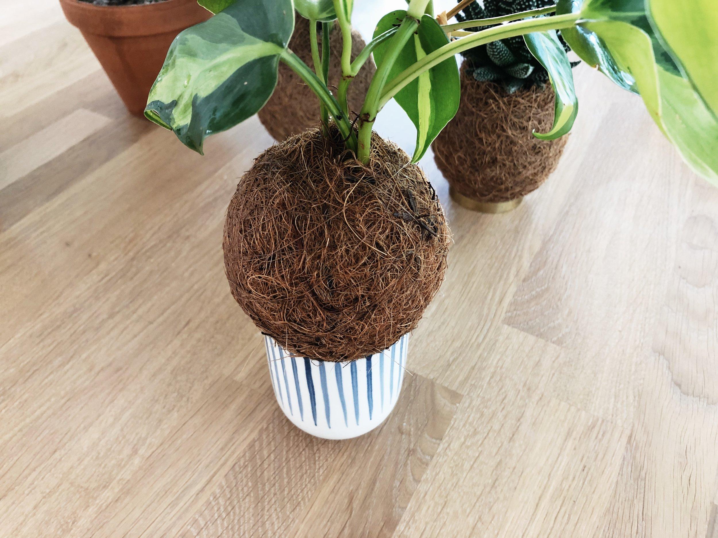 Schritt 5 - Lass Deinen Pflanzenbommel abtropfen*.*Wenn Du Deinen Pflanzenbommel abends wässerst und über Nacht abtropfen lässt, tropft am nächsten Tag sicher nichts mehr nach.