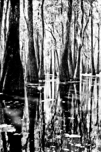 Bald cypress on the swampy lake in Caldwell Parish. Photo by Byron Carr.