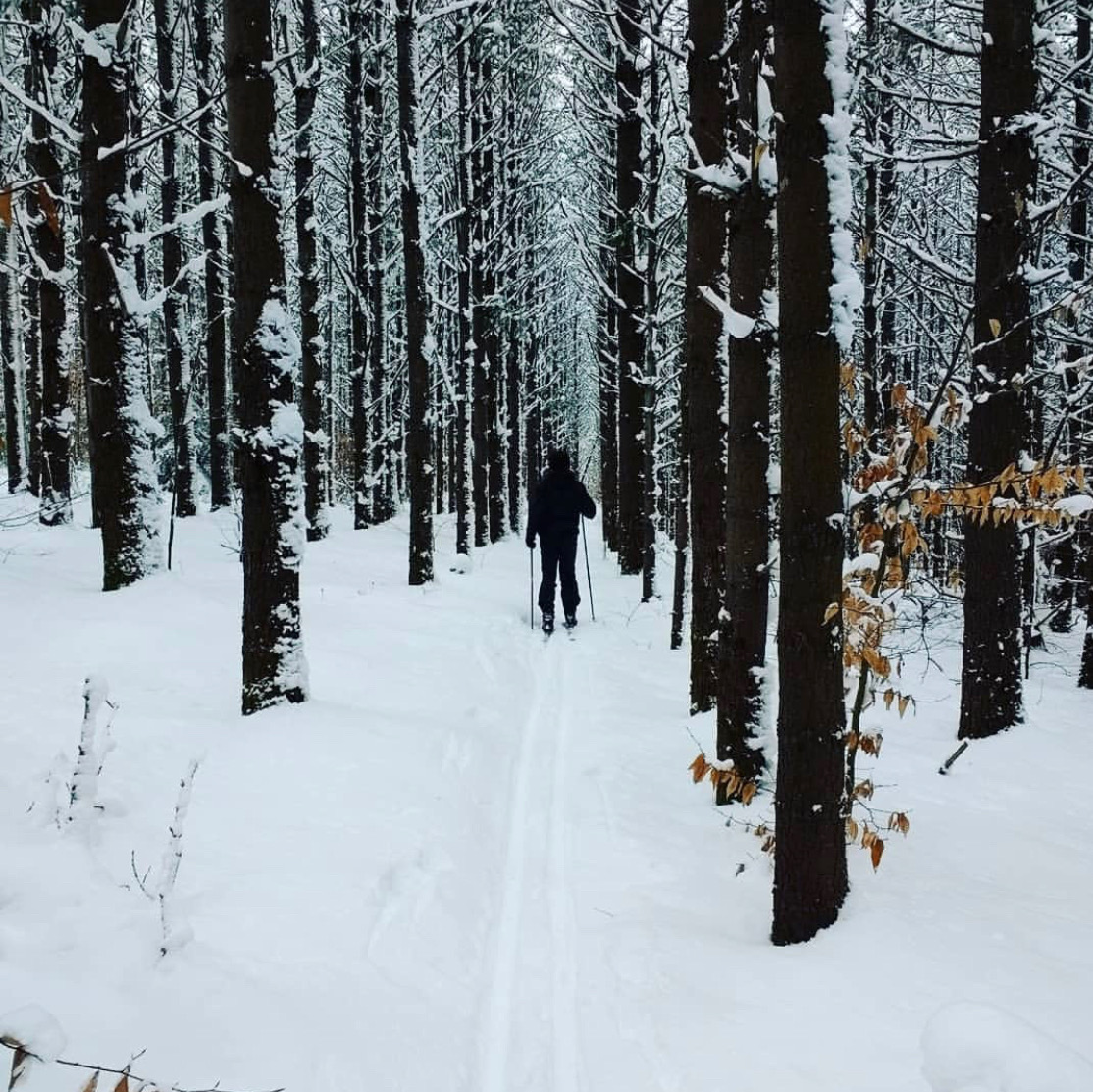 lake-of-the-woods-cross-country-skiing-4.jpeg