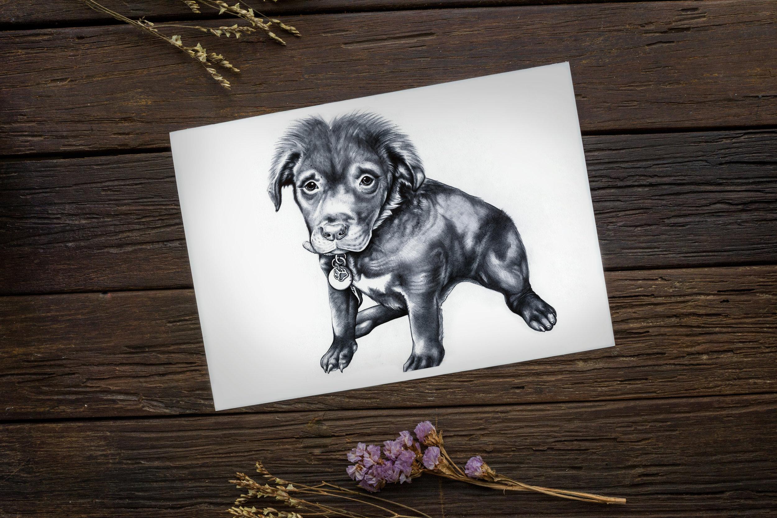 Puppy Portrait 1 staged.jpg