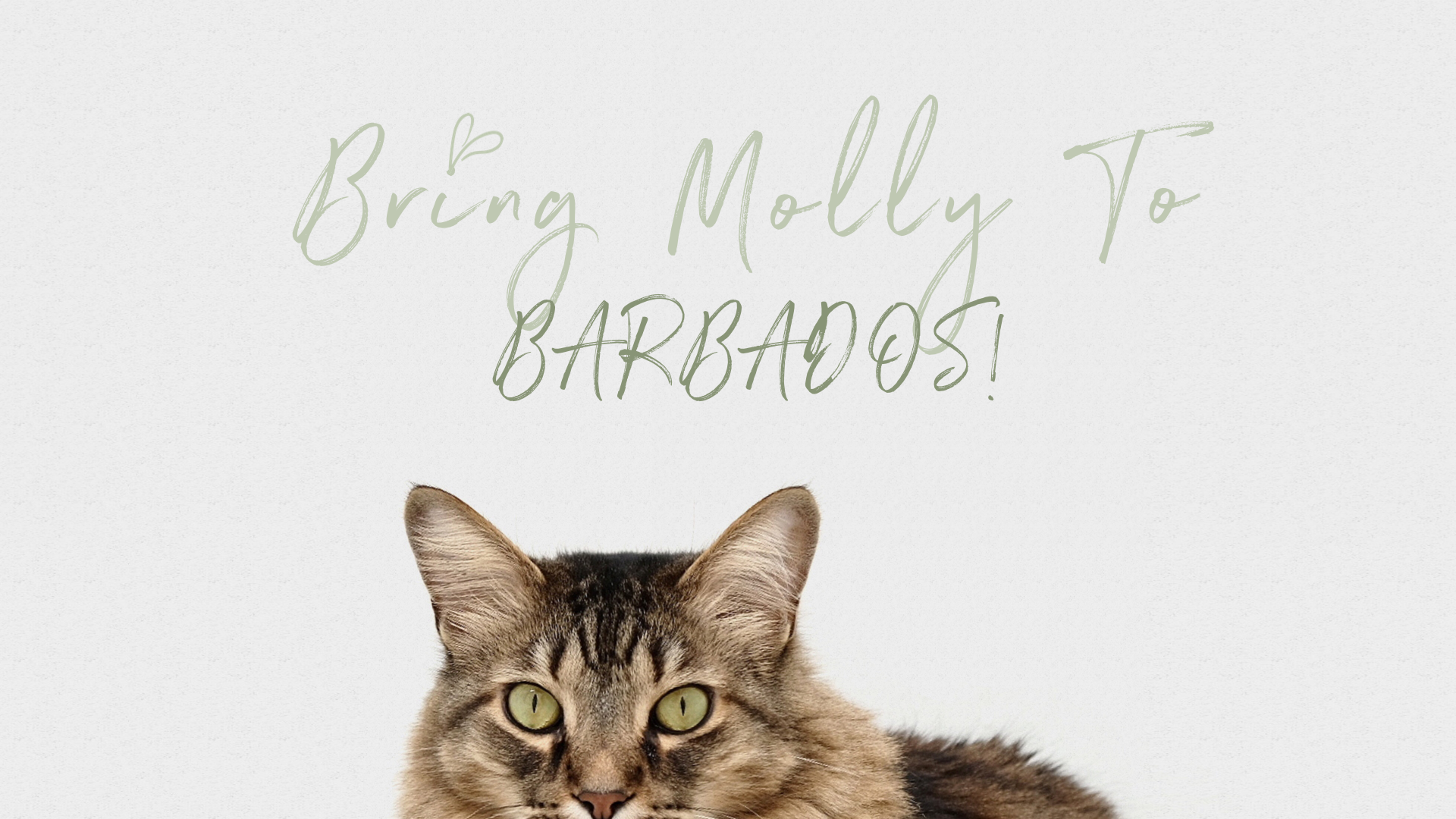 Bring Molly to Barbados!