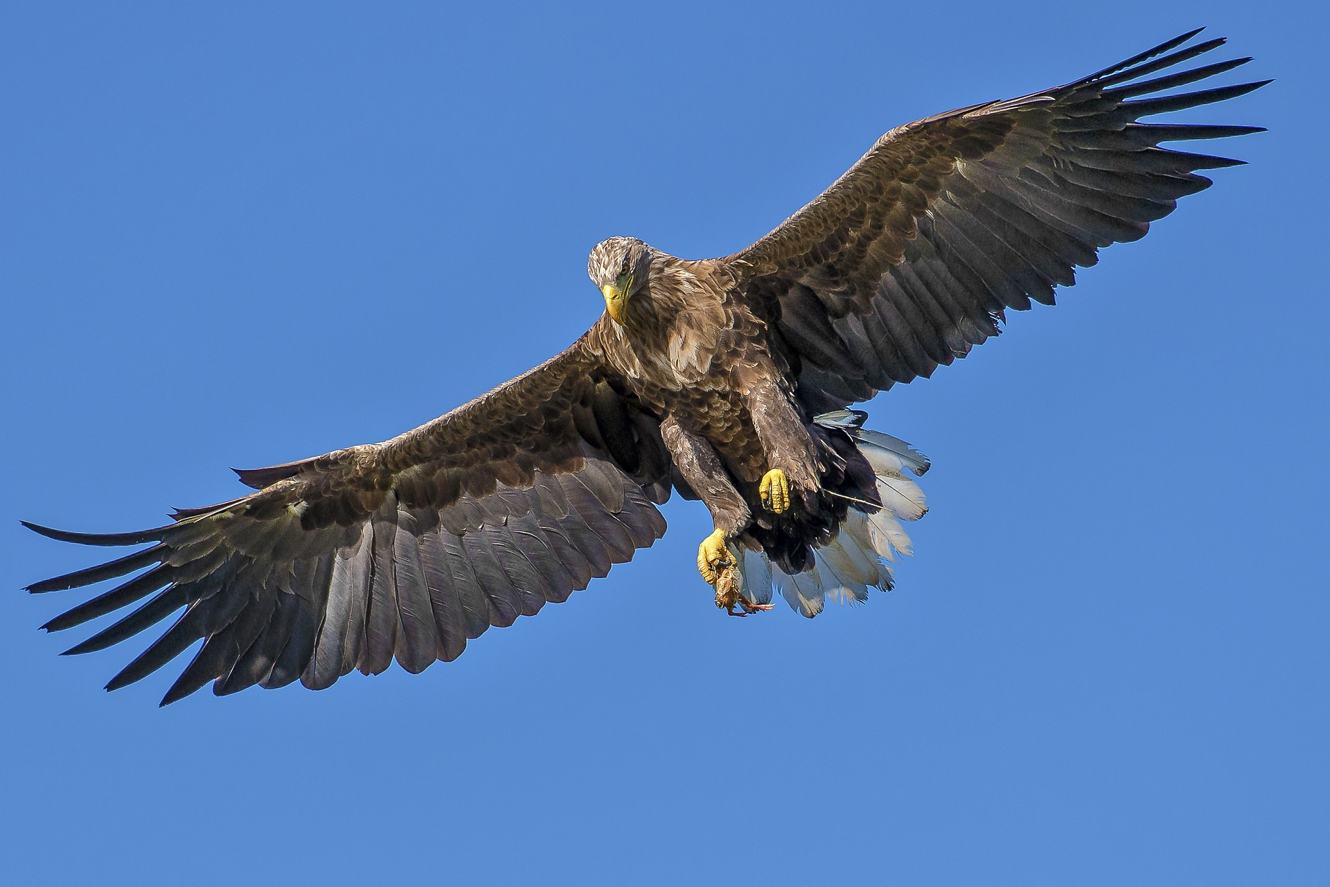 Soar even higher with the RDL Eagle.