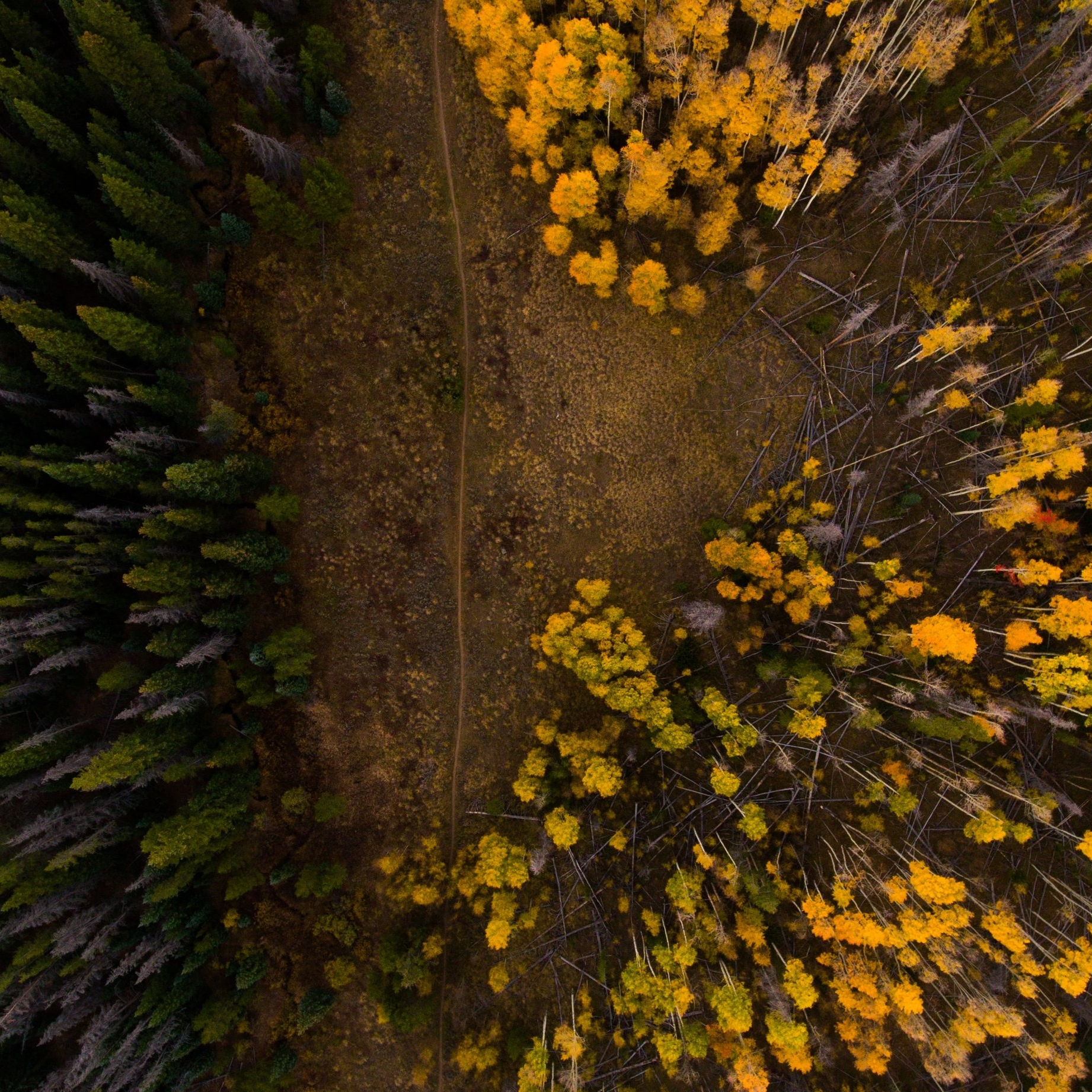 Explore - Our Banff