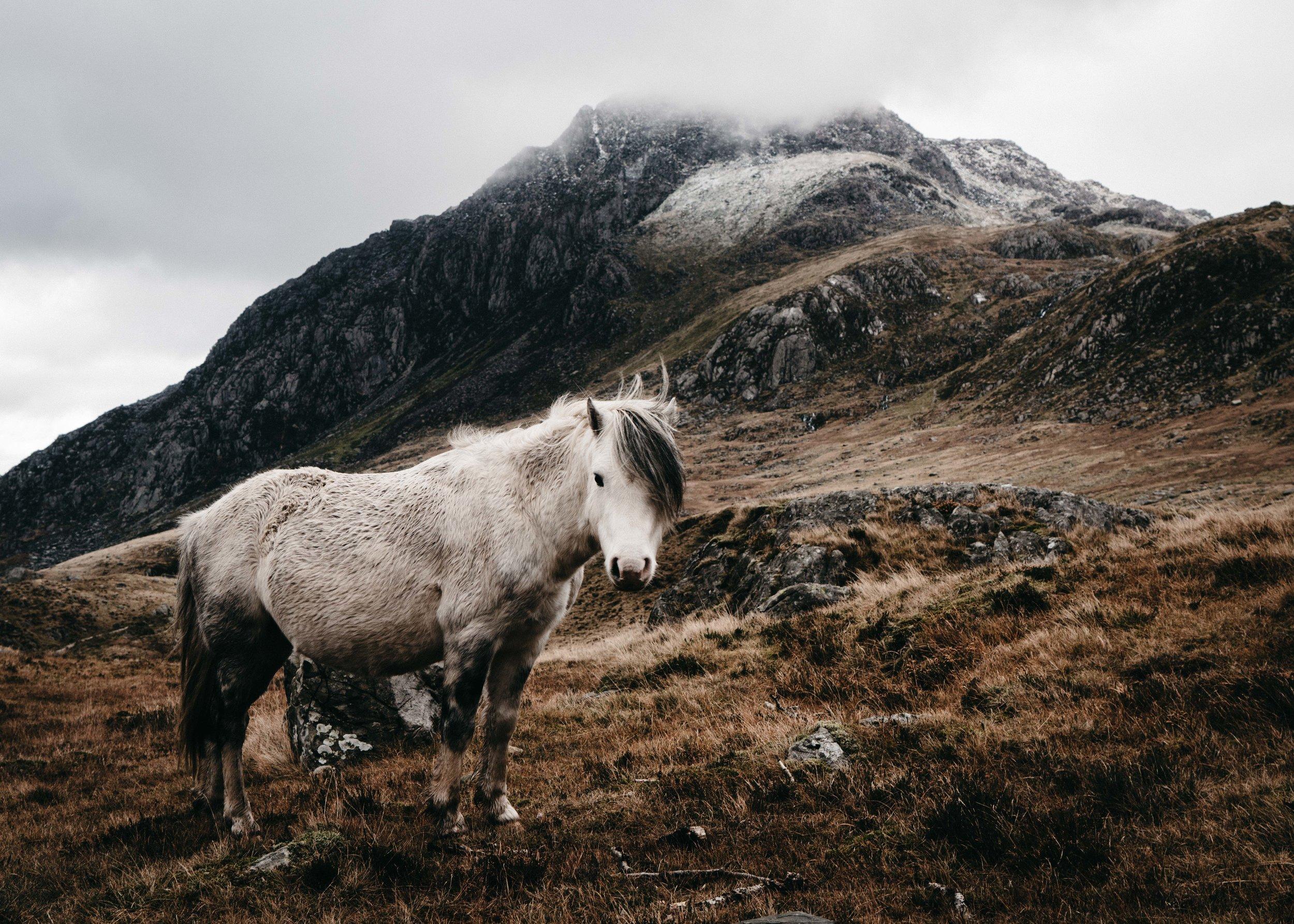 Carneddau Pony and Tryfan