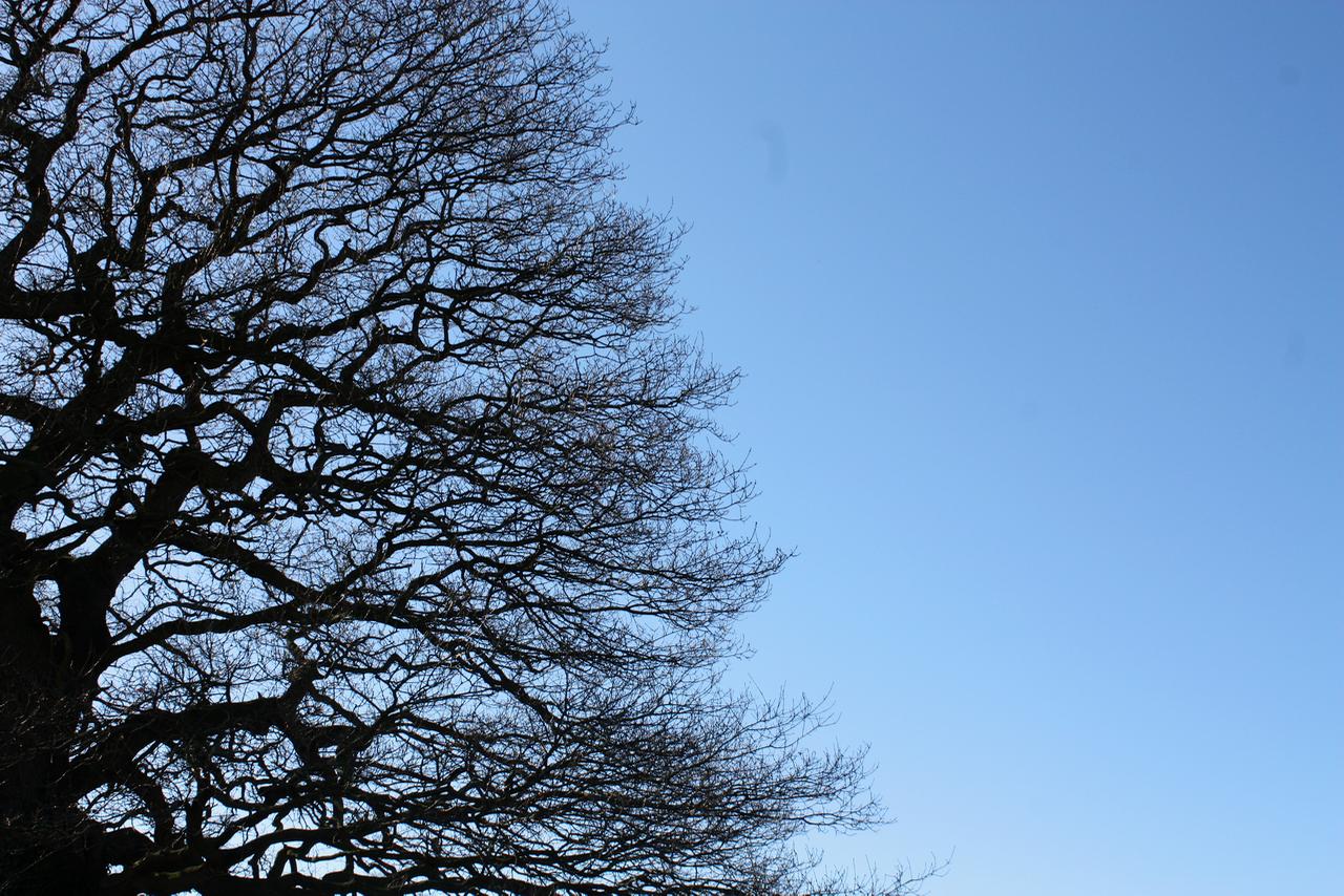 Oak 3.png