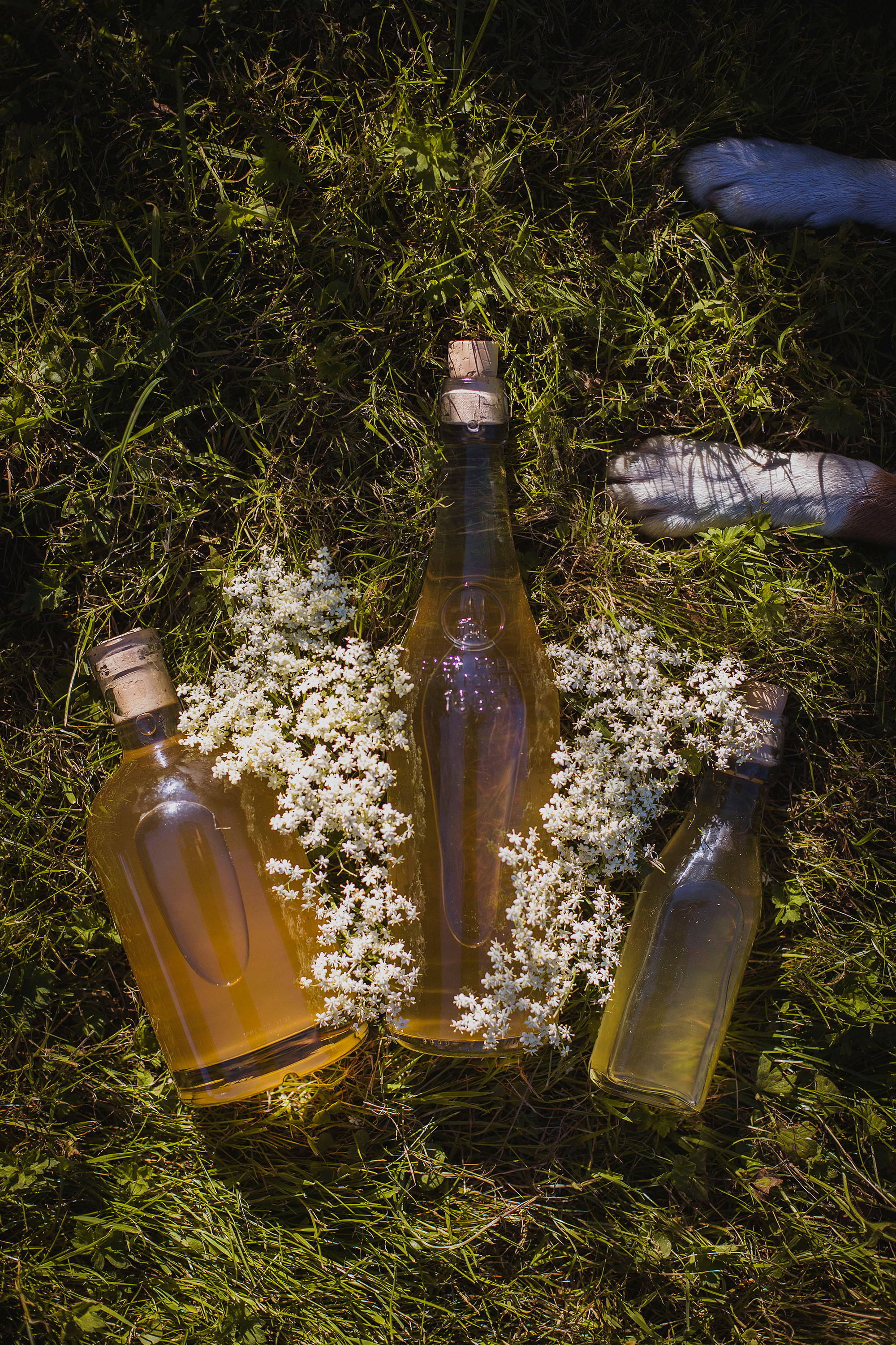 Elderflower-4.jpg