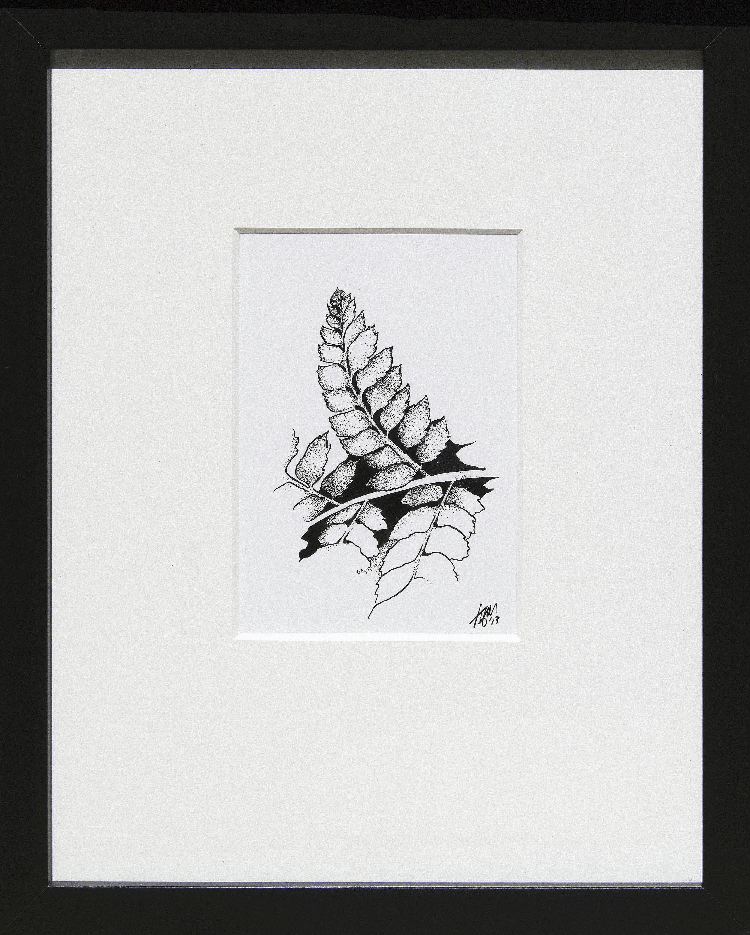 Dryopteris sp. pinna