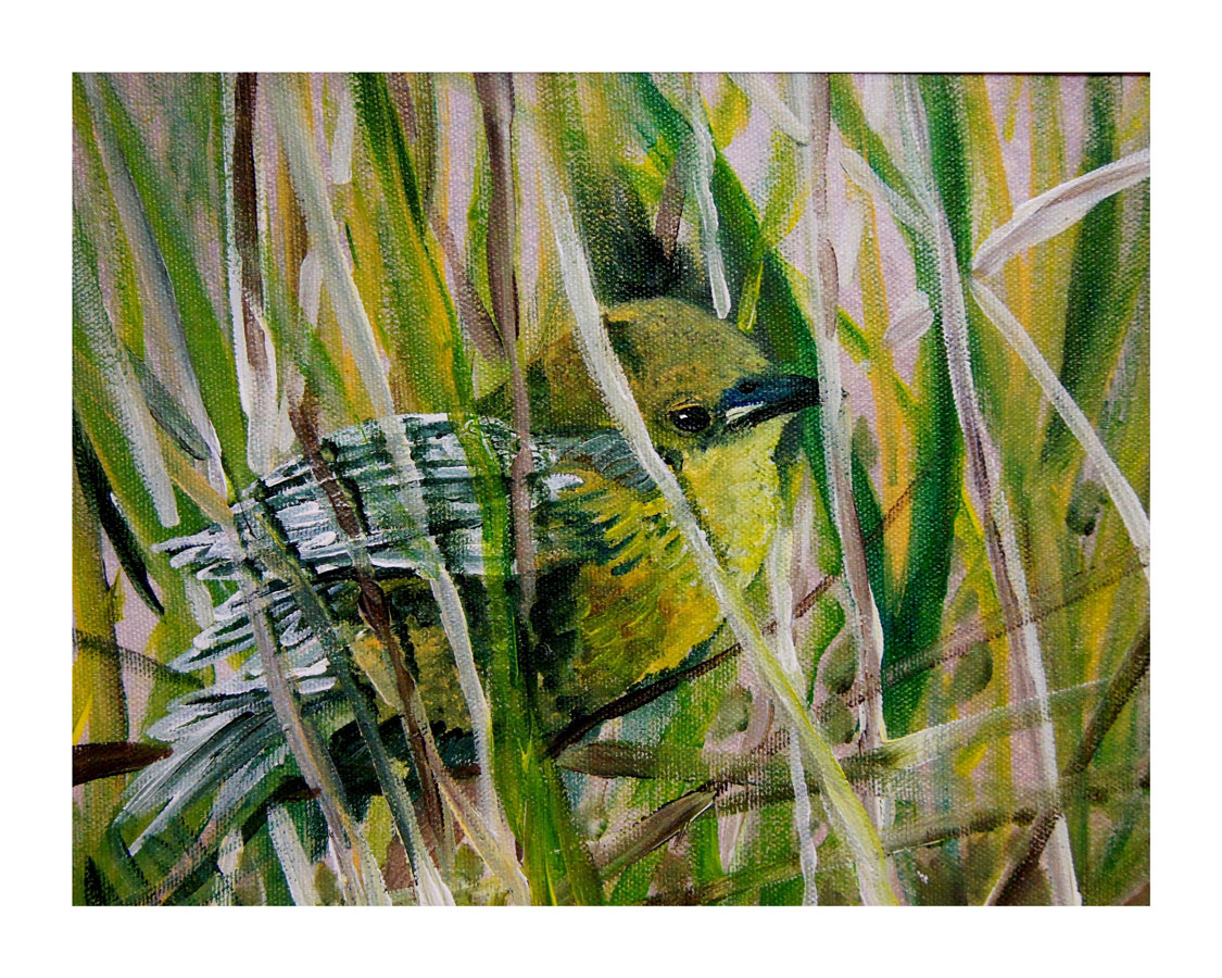 Warbler in Hiding, Acrylic, 2012
