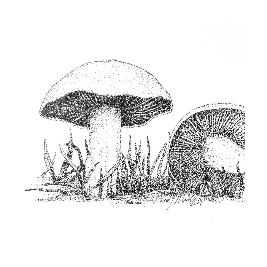basidiomycota-b.jpg