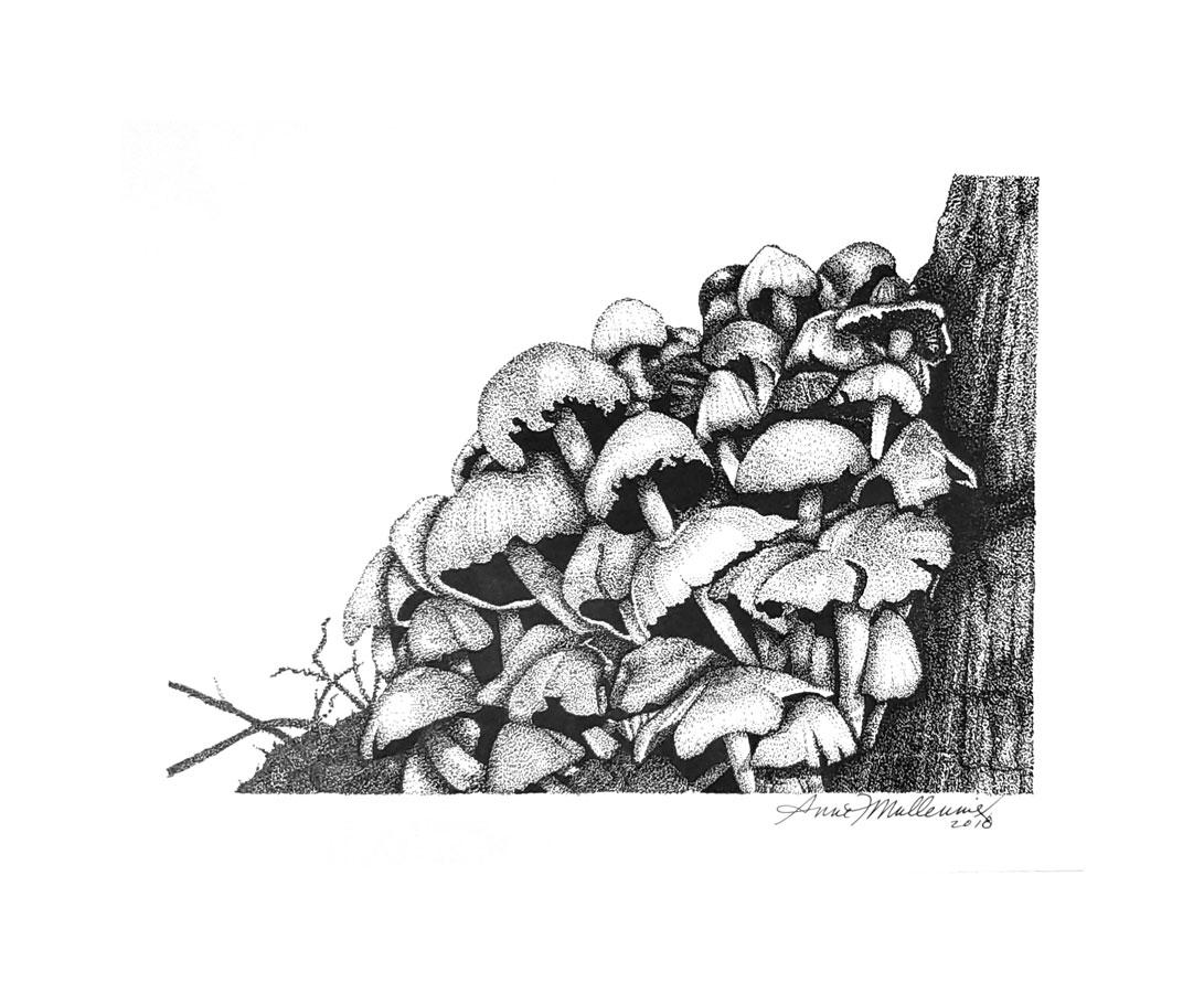 mushroomstand.jpg