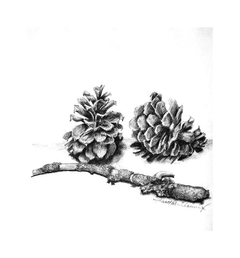 pinecones_2017.jpg