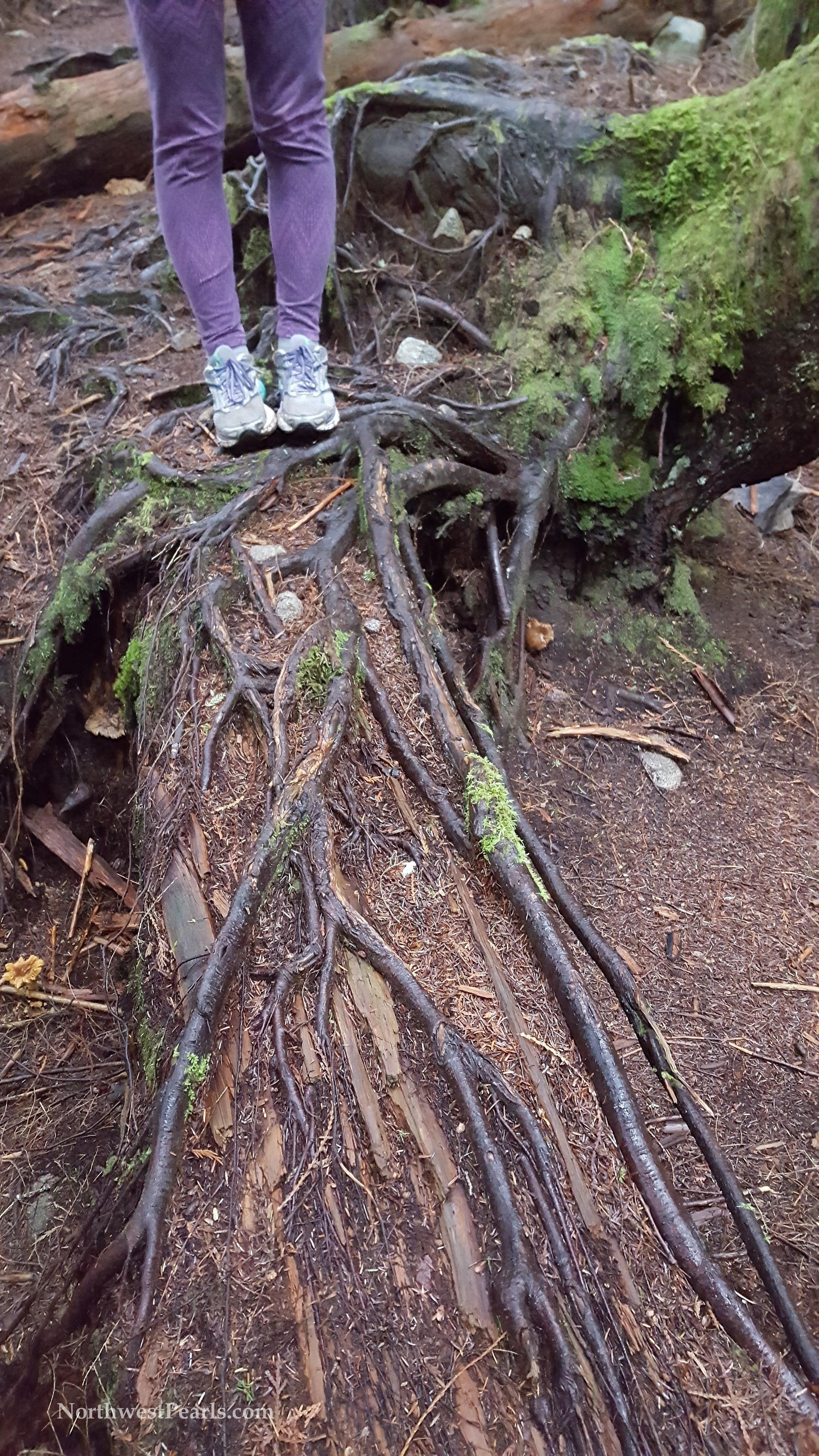 otter-falls-blog-5.jpg