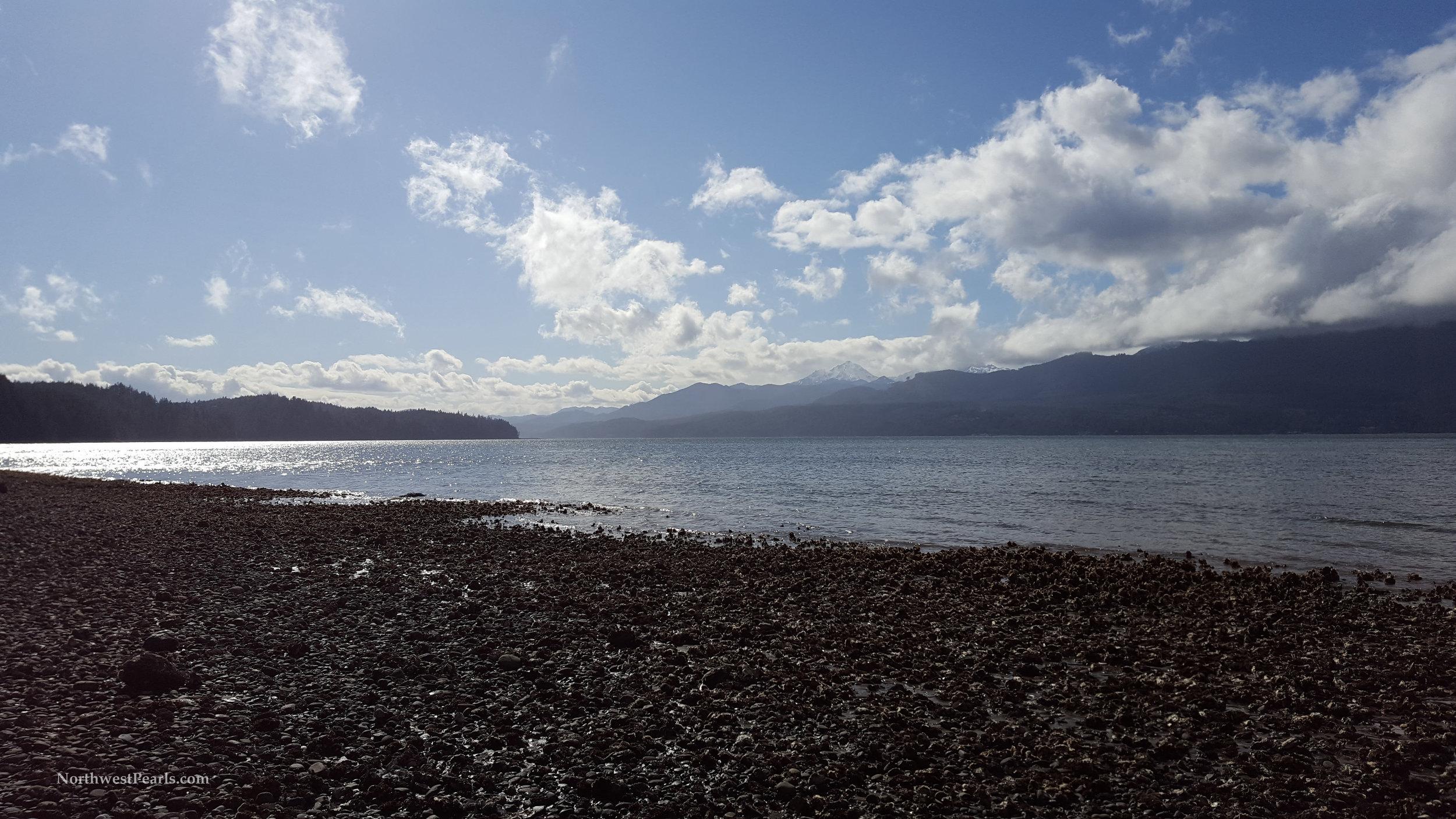Northwest Pearls    Guillemot Cove    Blog