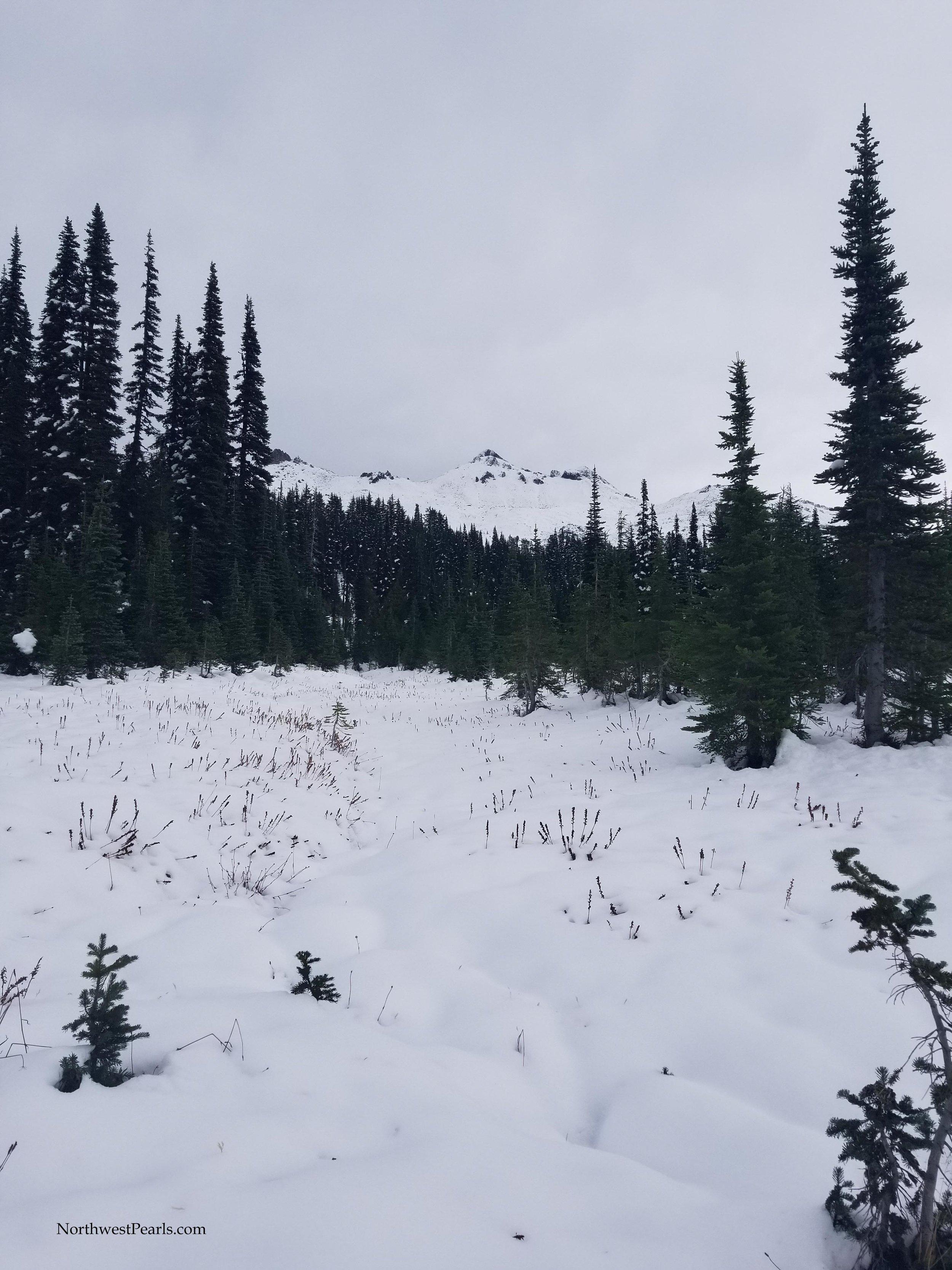 Snowgrass Flats-5.jpg
