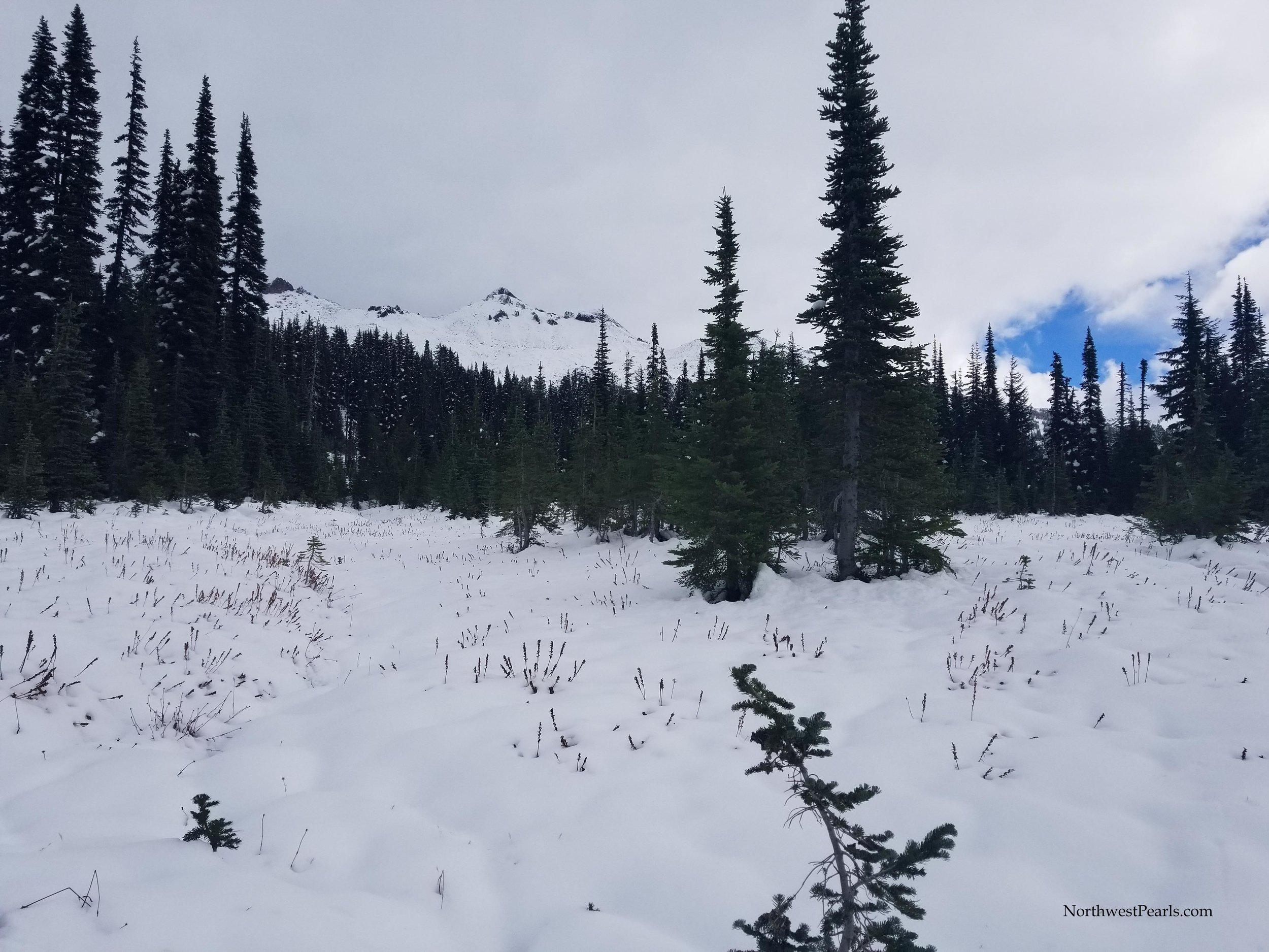 Snowgrass Flats-4.jpg