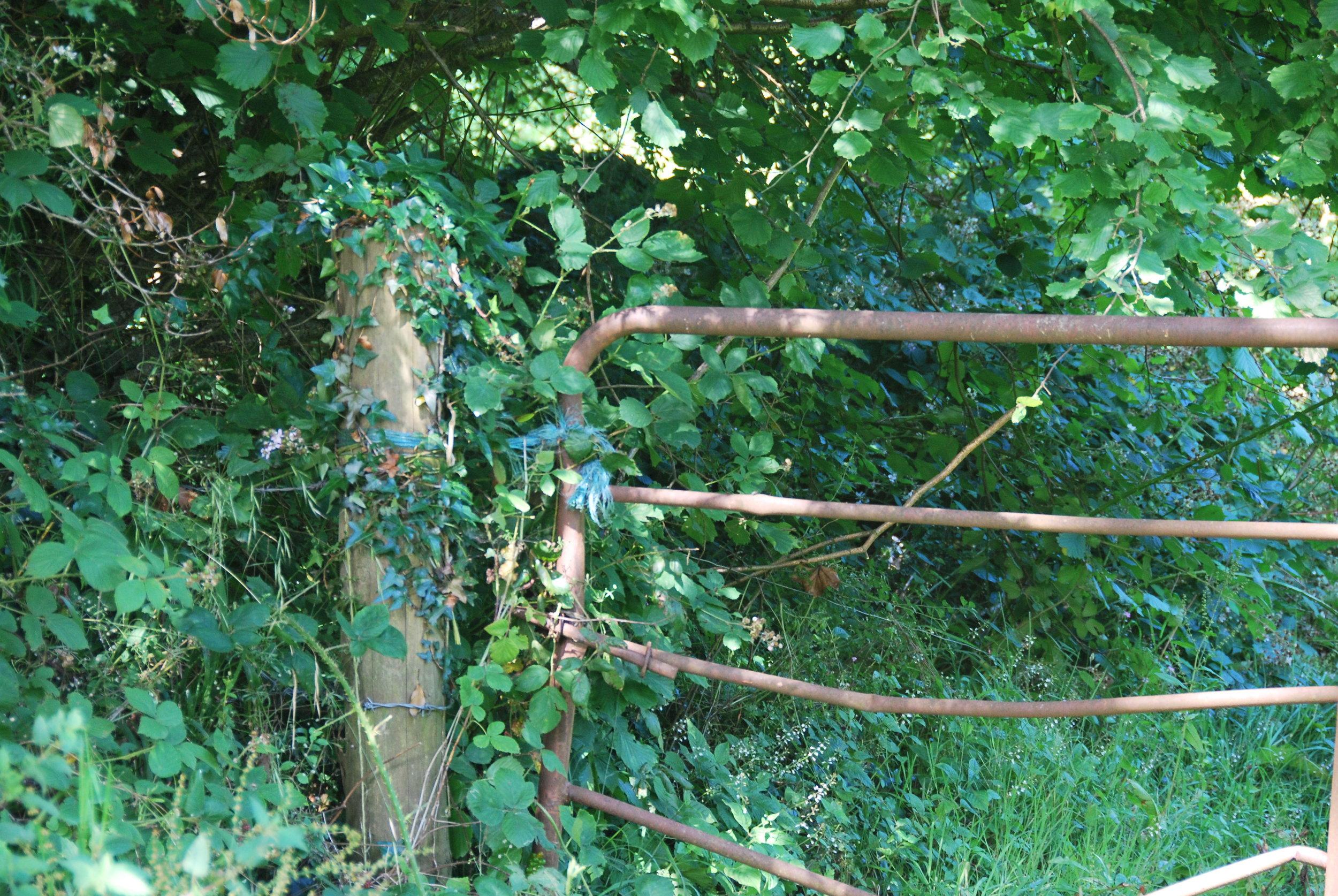 gate rusty trees ireland.jpg