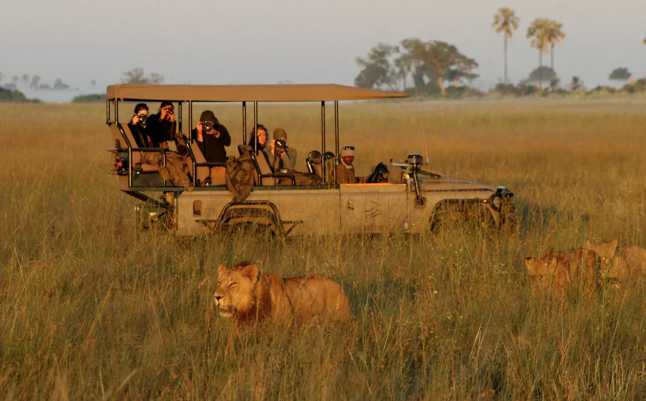 Rothschild Safaris