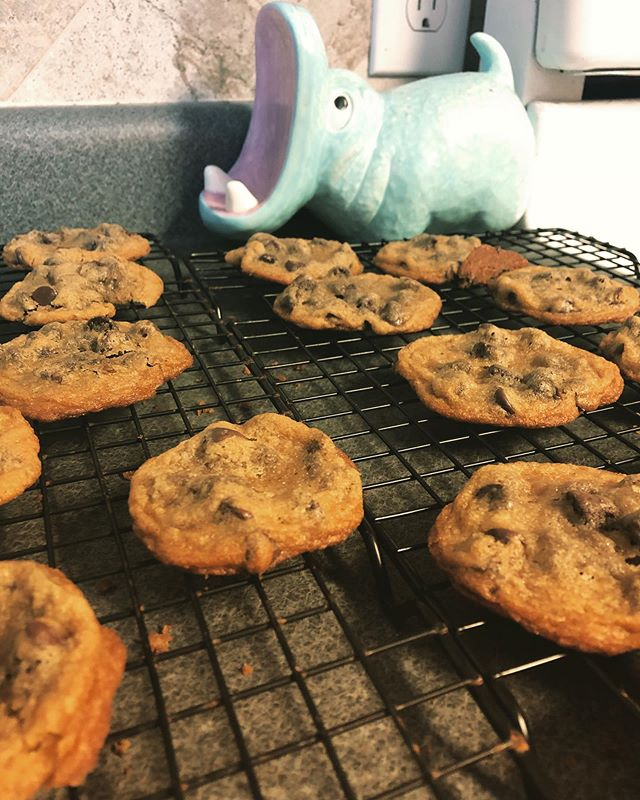 "These cookies were not pretty enough to be sold at a bake sale, but luckily this hippo chomped them all anyway.  We talk about the pros and cons of Bake Sales in the latest ""Shelley Has Opinions,"" and you should listen! Link in bio."