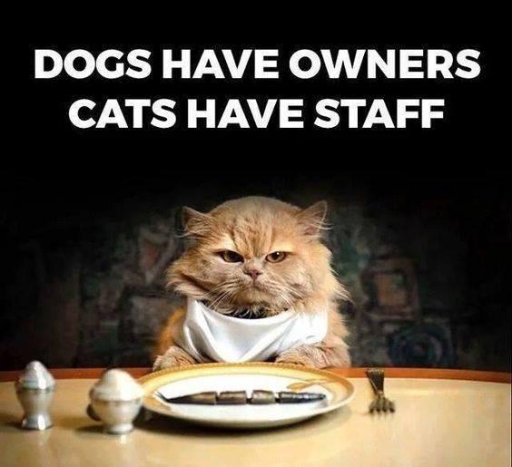 linda catErs to Demanding Pets