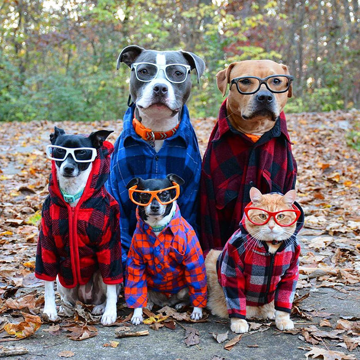 Your dog's pack consists of all members of your household.
