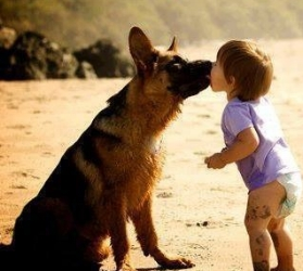 we love Dogs because Dogs give their love & loyalty to us unconditionally.