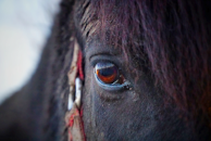 WT Horse Eye View.png