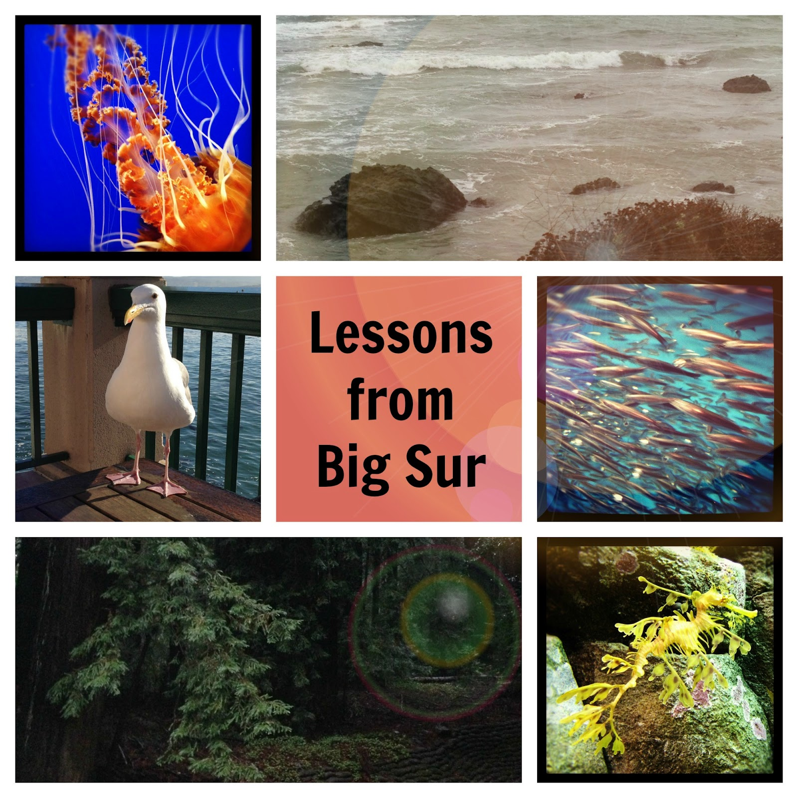 Clockwise from top left:  jellyfish, view from the PCH, sardines, a sea dragon, trees at the conference center, and a seagull who tried to steal my breakfast