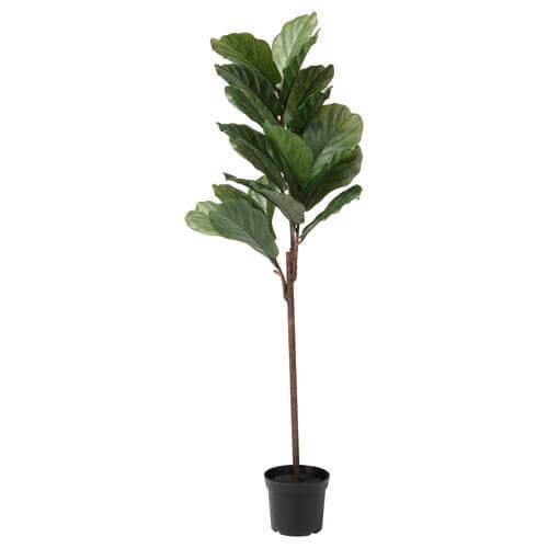 Fejka Artificial Potted Fiddle-Leaf Fig | IKEA