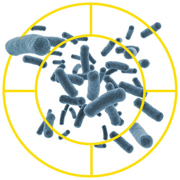 Bacteria Target-Recovered.jpg