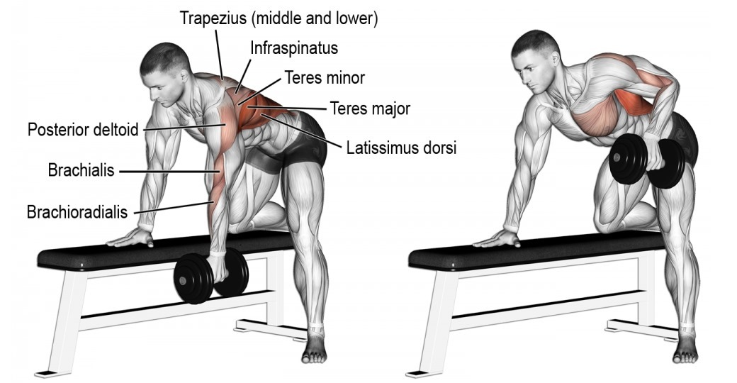 4-reasons-you-need-one-arm-dumbbell-row.jpg