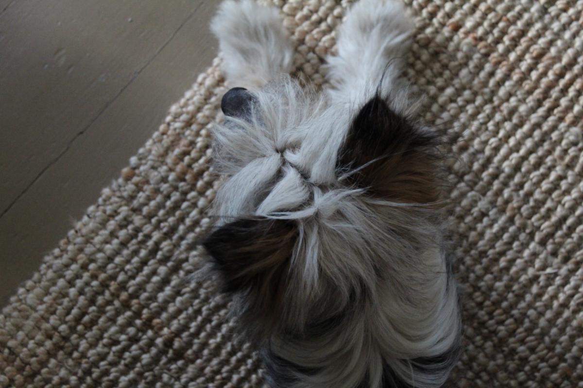 Hundebesuch hilft natürlich sehr beim Freude-Vervielfachen.