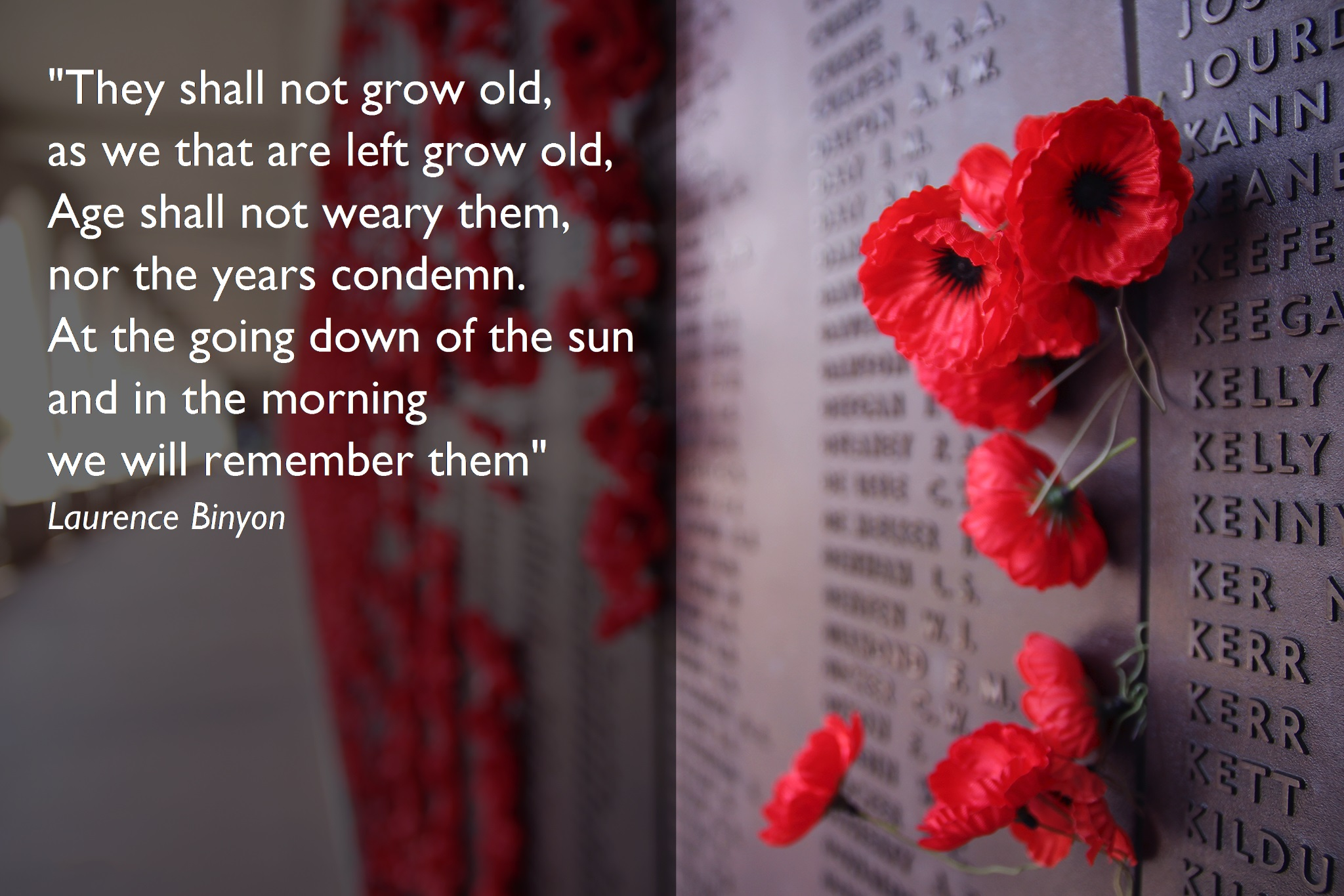 """Theme of the Week - Remembrance Day 