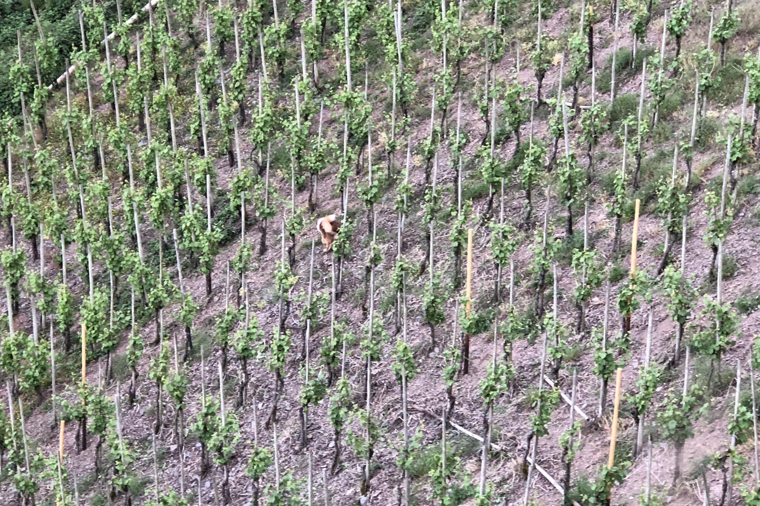 - Unsere Weinbauern gehören zu den besten Deutschlands und kultivieren in teils extremen Steillagen, mit viel Leidenschaft und Hingabe Spitzenweine, die mitunter als