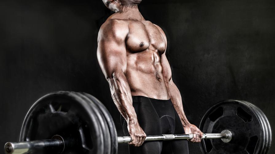 barbell_muscle_muscular_main.jpg