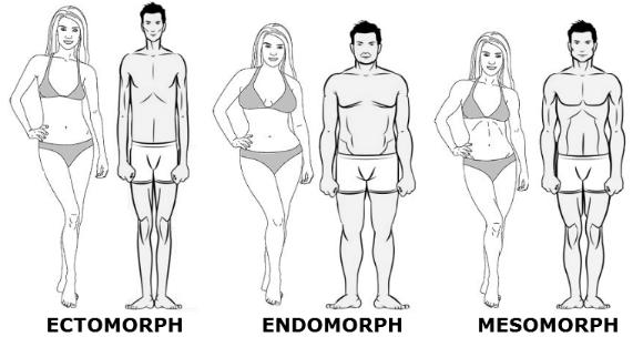 bodytypes.png