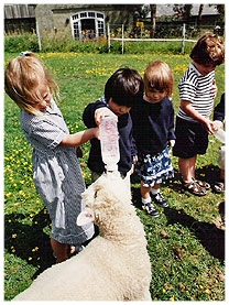 South Hills School Wilton Sheep
