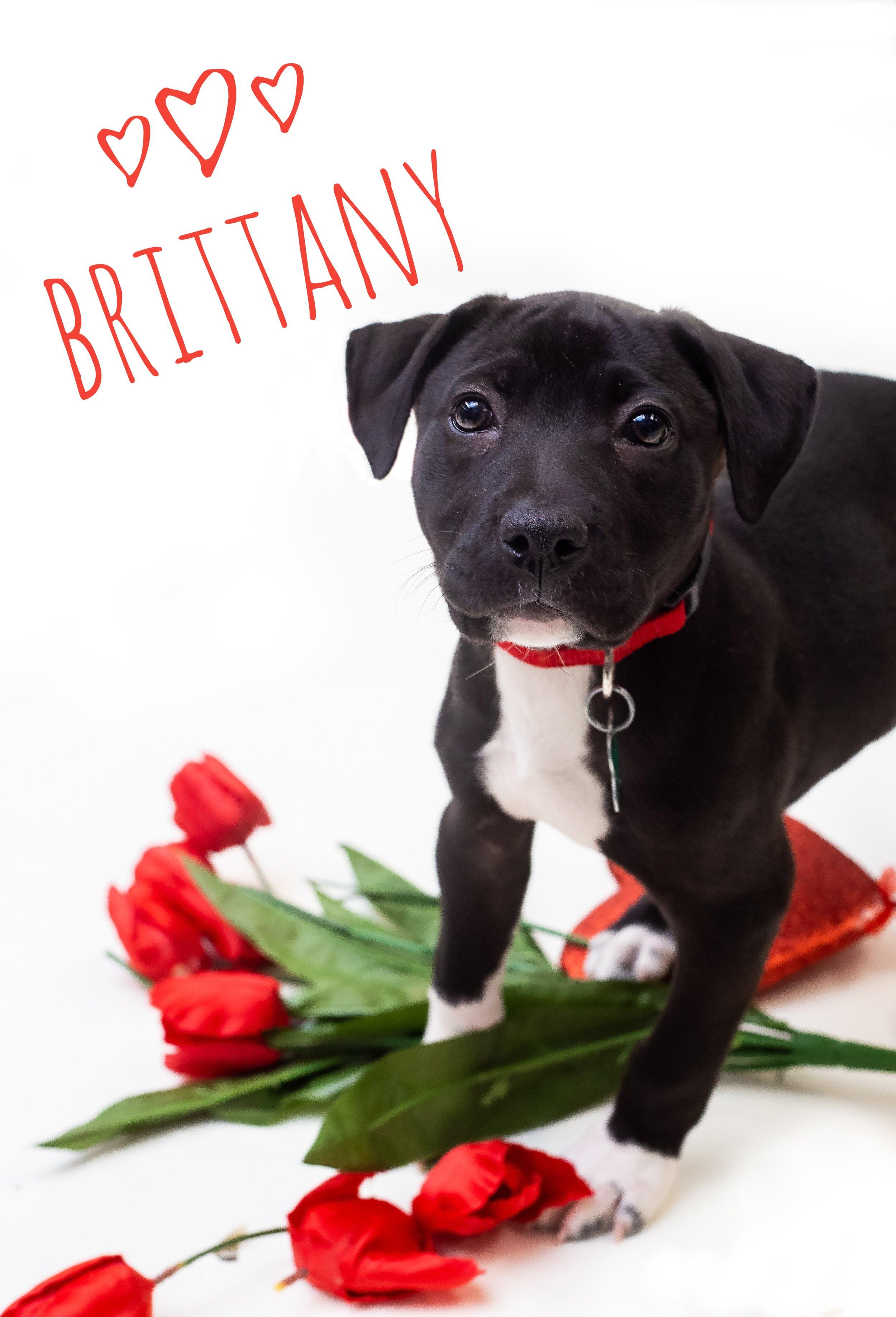Brittany (2)-01.jpeg