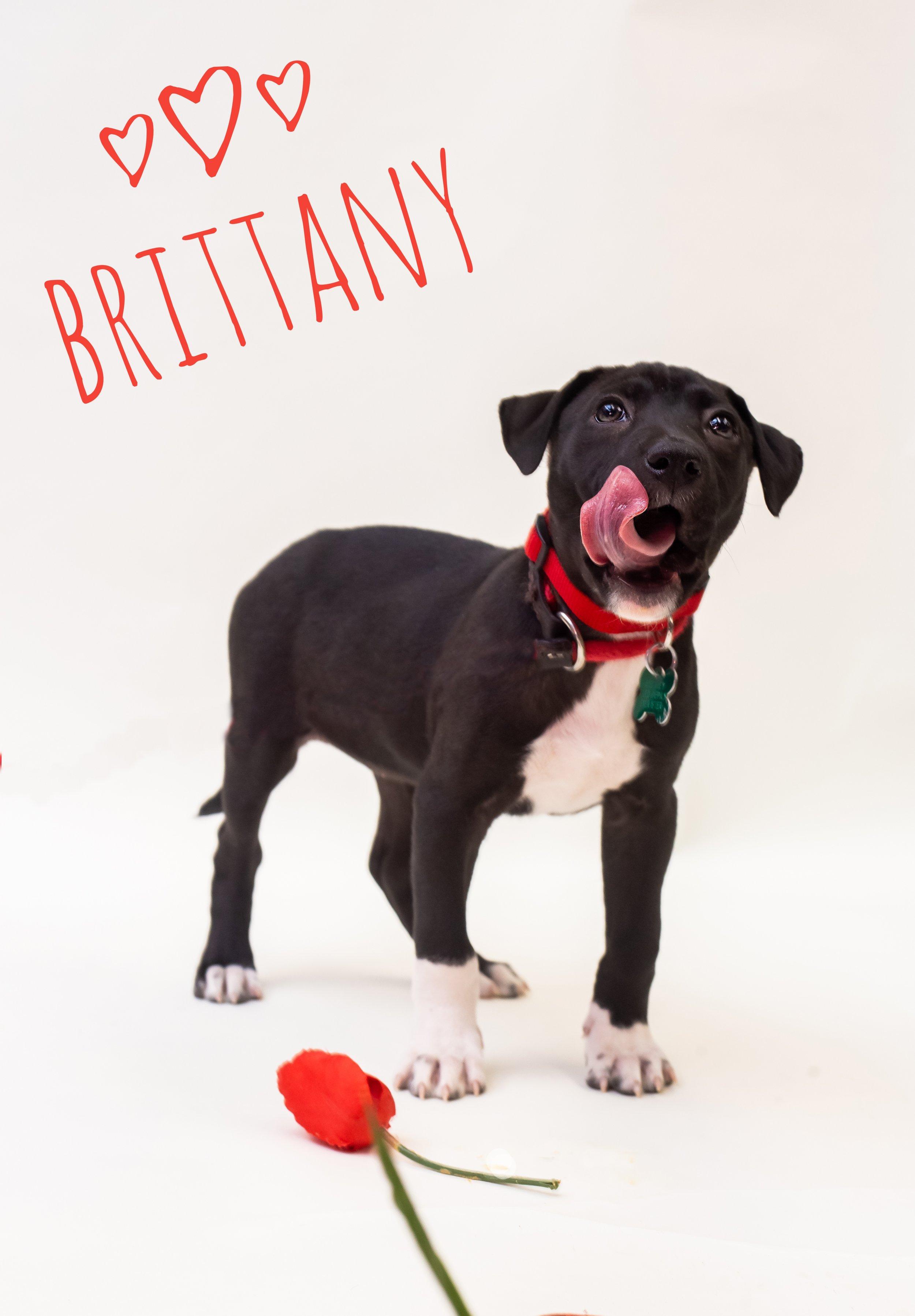 Brittany (1)-01.jpeg