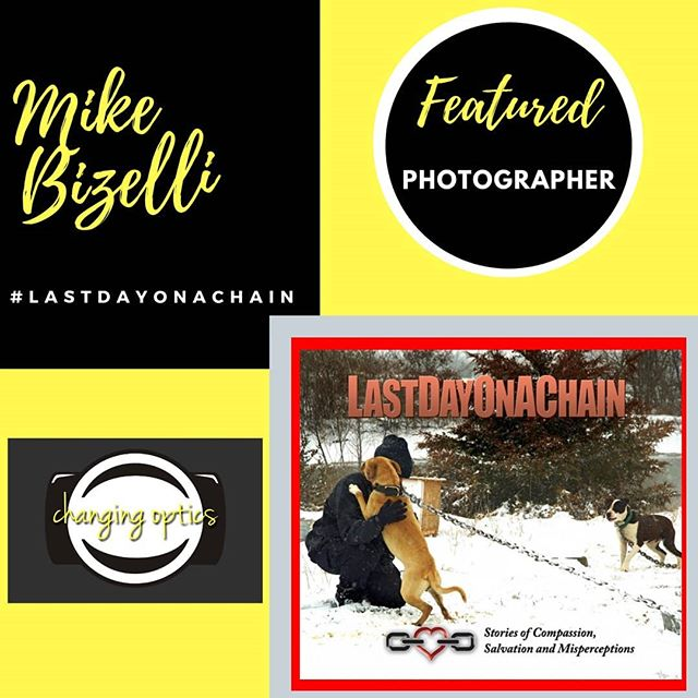 LAST DAY ON A CHAIN Featured #photoactivist  Mike Bizelli @Bizelli 📸 As #adoptdontshop Animal Rescue is a passion of ours we fell in love with the work Mike is doing ✔ In his own words - I'm Mike Bizelli, a photographer in St. Louis, Missouri. My project is a book,Last Day on a Chain, a #photodocumentary of #compassion, salvation and misperceptions. For the past 20 years I have documented over 100 companion #animalrescues of one sort or another for the Humane Society of Missouri and the @ASPCA , the American Society for the Prevention of Cruelty to Animals.Ten of those rescues have been for #pitbull fight dogs. ✔ Last Day on a Chain, Stories of Compassion, Salvation and Misperceptions sheds light on the evil #bloodsport of #dogfighting, overcomes the negative stereotypes that #pitbulls suffer in the media and pays homage to the #animalwelfare agencies and legions of compassionate rescuers, shelter workers and #foster and #adoption families.