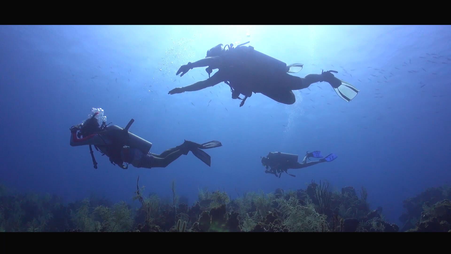 Divers swimming (1).jpg